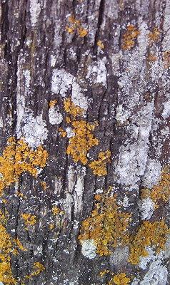 lichen4.jpg