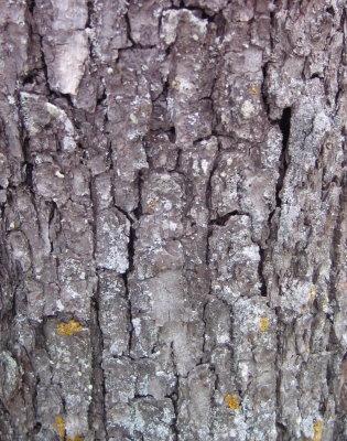 lichen5.jpg