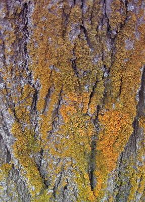 lichen6.jpg