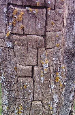 lichen7.jpg