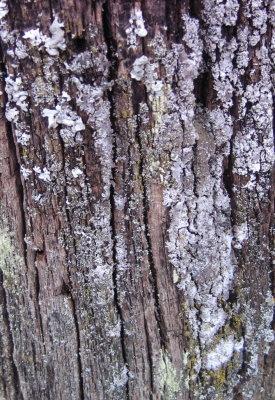 lichen8.jpg