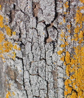 lichens1.jpg