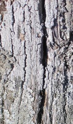 lichens3.jpg