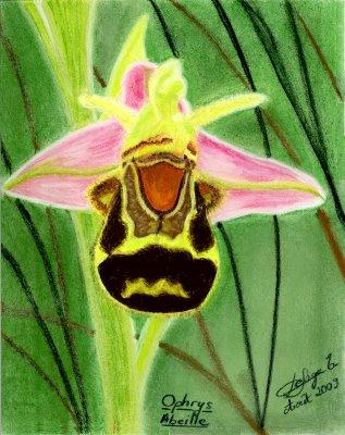 ophrysabeille.jpg